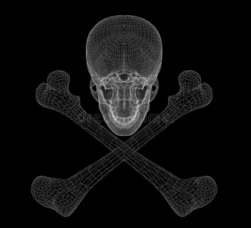 Skull and Bones. Human body, body structure , wire model vector illustration
