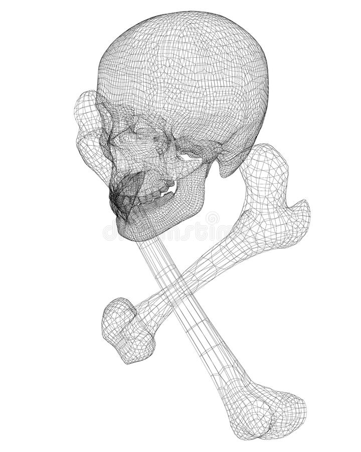 Skull and Bones. Human body, body structure , wire model stock illustration