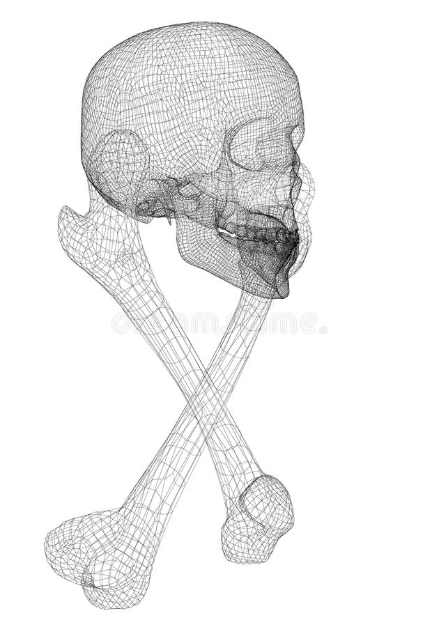 Skull and Bones. Human body, body structure , wire model royalty free illustration