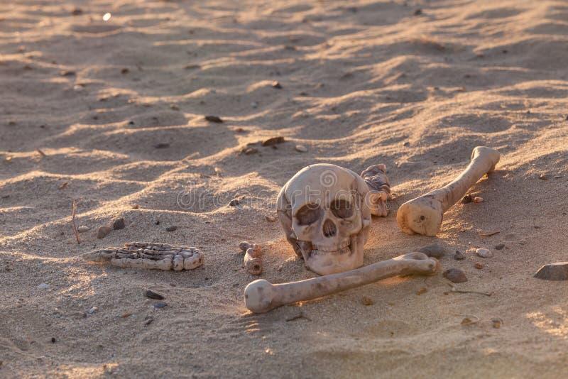 1,236 Bones Desert Photos - Free & Royalty-Free Stock Photos from Dreamstime