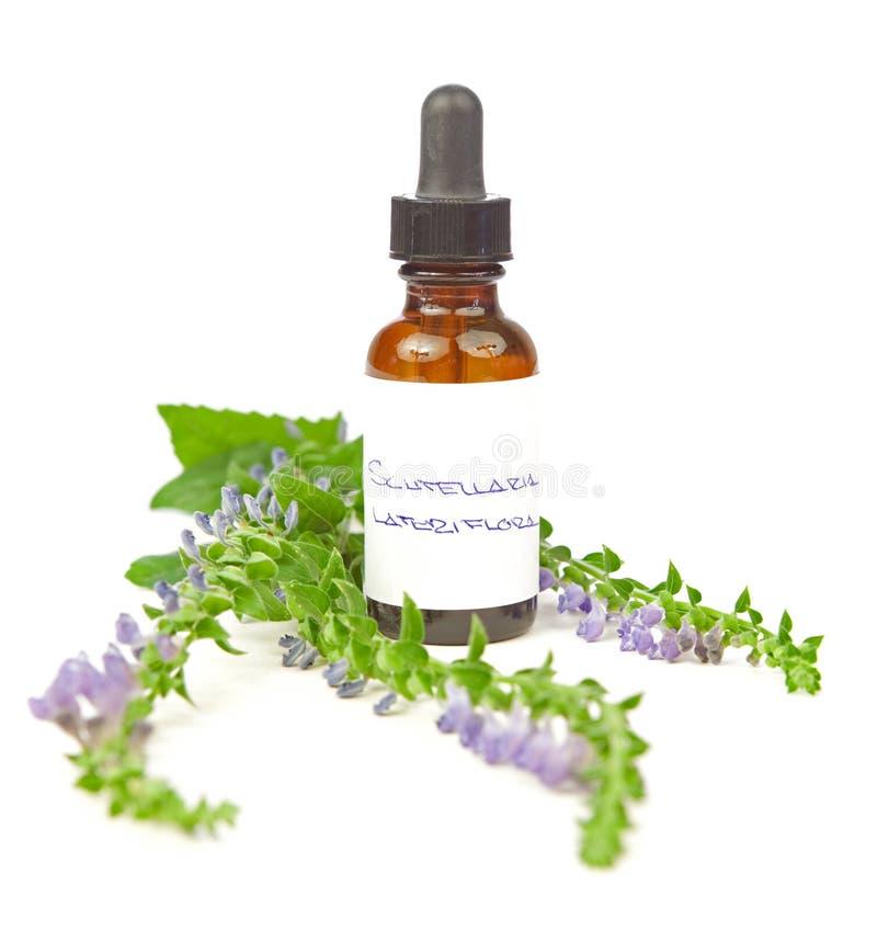 Skull cap herbal tincture or oil stock photo