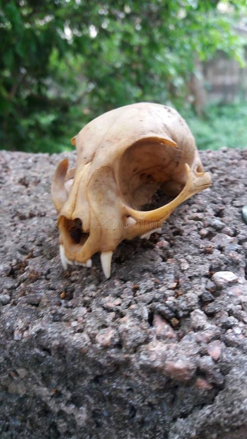 Skull Cat Found in Yard nature stock image
