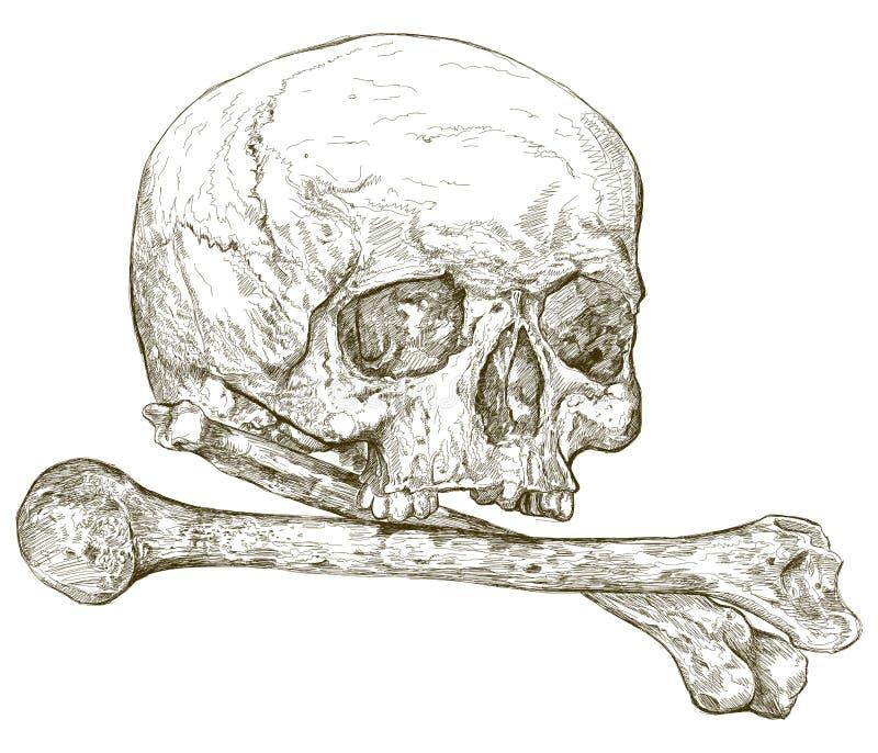 Skull & crossbones vector illustration