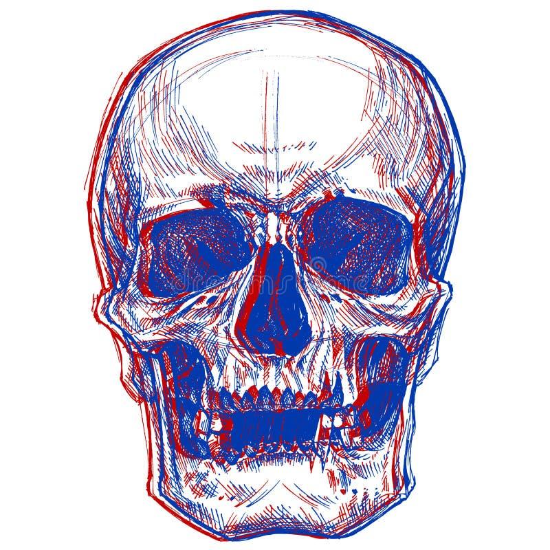 Skull 3D stock image