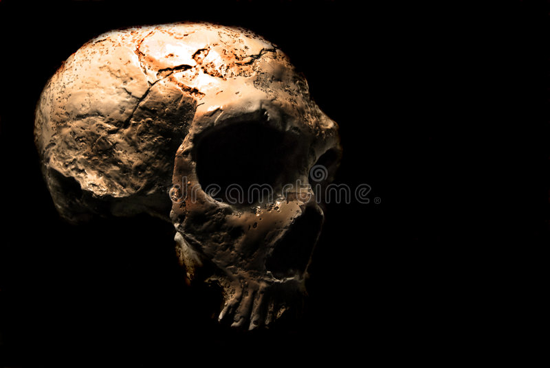 Skull in the dark. Scary skull in a black background stock photography