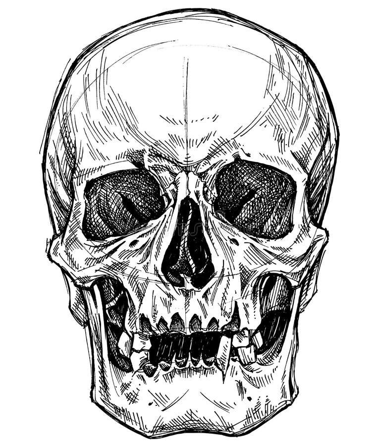 Skull Drawing line work vector. stock illustration