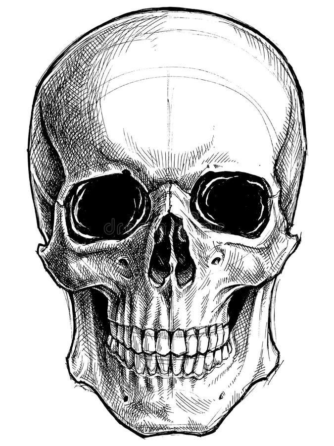 Skull Drawing line work vector. royalty free illustration