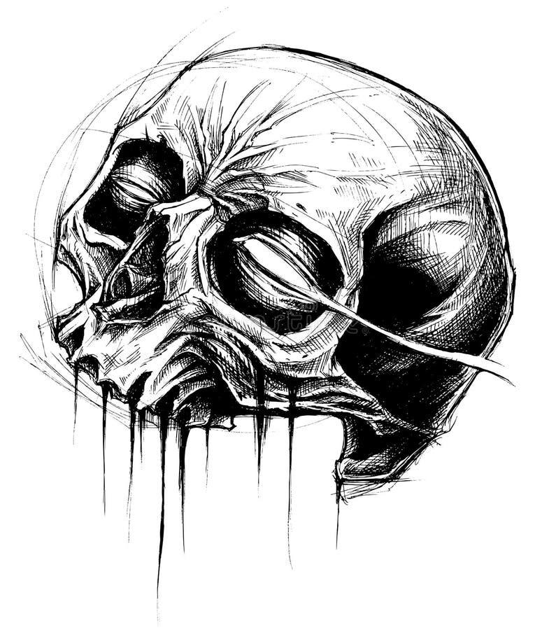 Skull Drawing line work vector. vector illustration