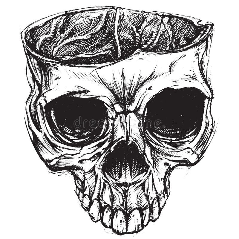 Skull drawing 02 stock illustration