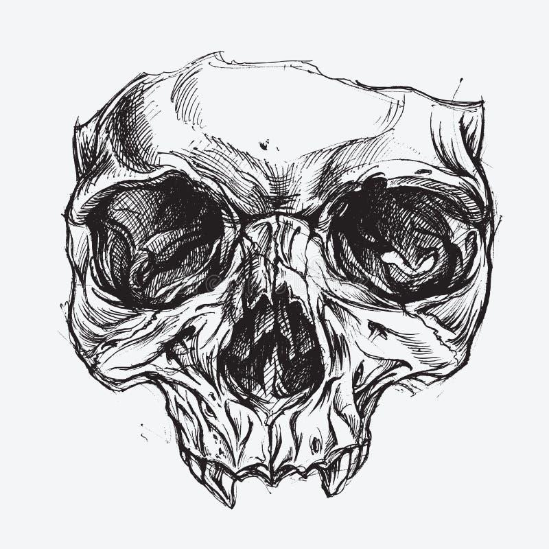 Skull Drawing stock illustration