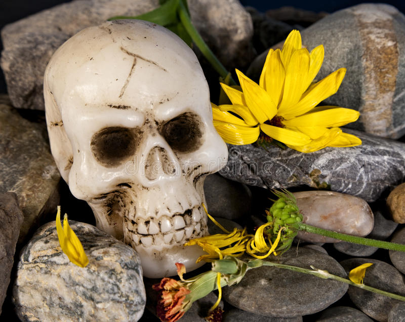 Skull and flowers stock images