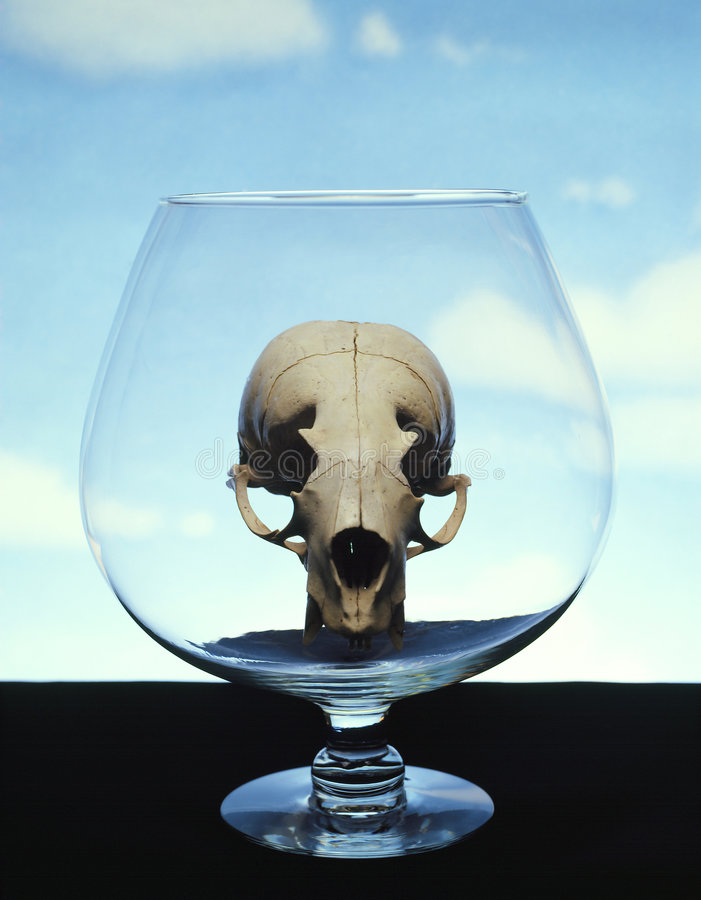 Download Skull In Glass Stock Photos - Image: 351443