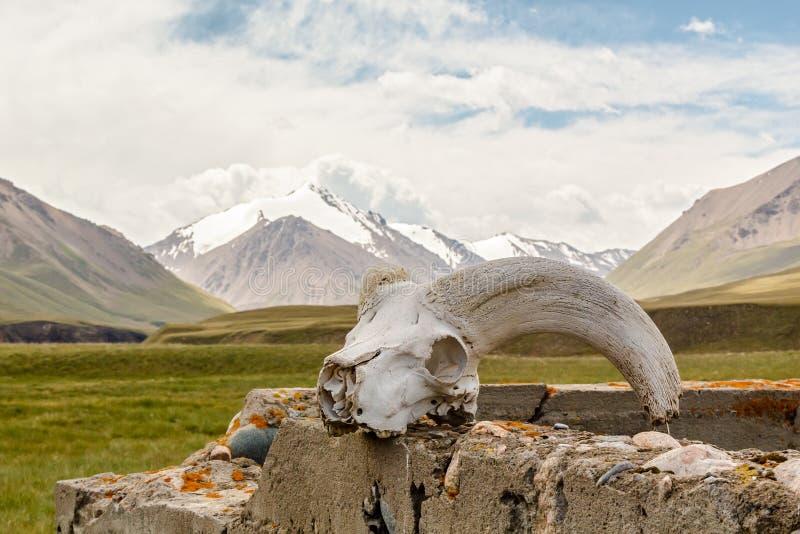 Download Skull gornoshl sheep stock photo. Image of decoration - 33545570