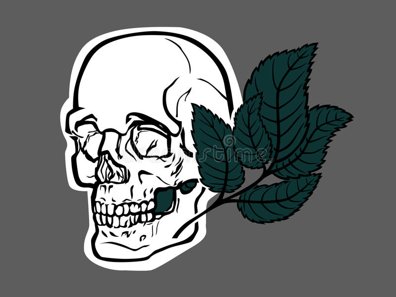 Skull and green leave. An illustration of stylized skull, with green leave. On grey background royalty free illustration