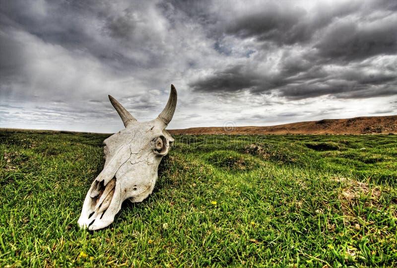 Skull on green plain royalty free stock photos