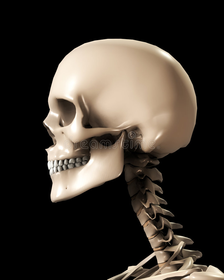 Skull Head Stock Photography