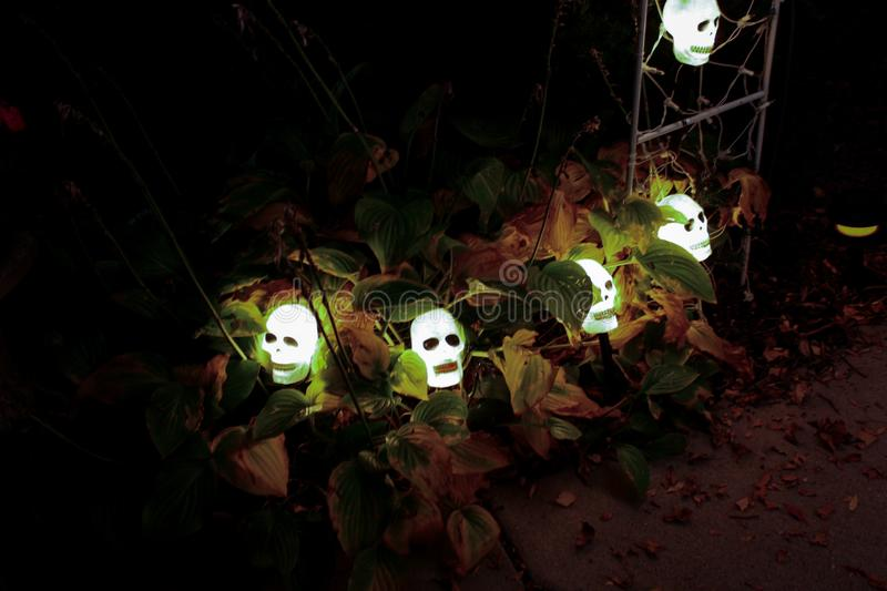 Skull Lights. A string of lighted Skulls are intermixed with the fall color of the Hostas that lit up the walkway stock photography