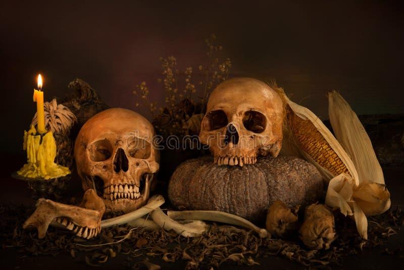 Skull. Many skulls on pile weathered leaf, still life style stock photos