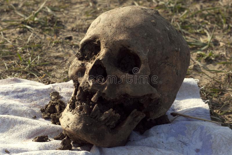 Skull of a Nogai woman. Exhumation. The ancient remains of the girl. Millennial bones of a girl. Female skull royalty free stock photo