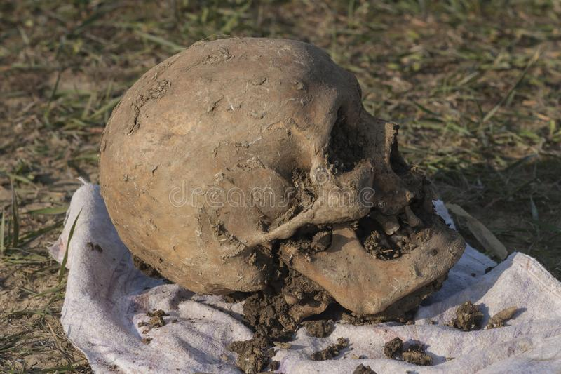 Skull of a Nogai woman. Exhumation. The ancient remains of the girl. Millennial bones of a girl. Female skull royalty free stock image