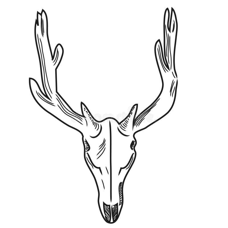 Free Skull Of A Deer Stock Image - 44193881