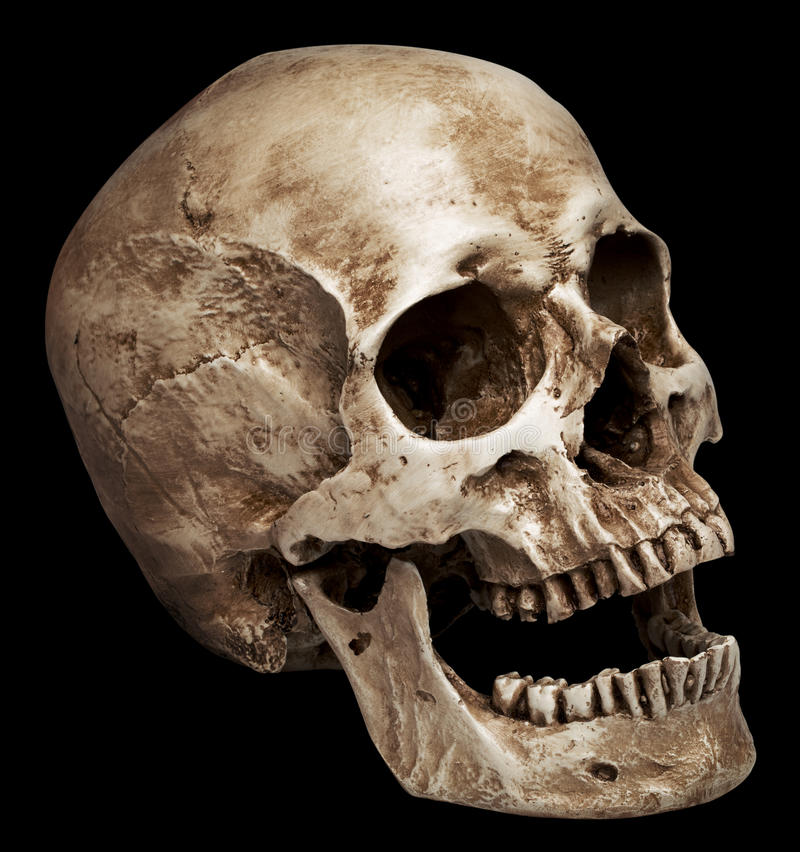 Human Jaw Tattoo: Skull-open Mouth Stock Image. Image Of Physiology