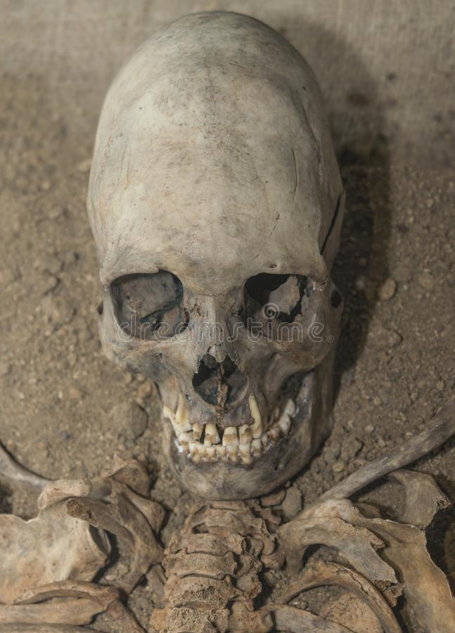 Skull and part of the alien body. Humanoid, fossilized alien old excavations archaeologist. Secret materials, extraterrestrial civilization royalty free stock photo