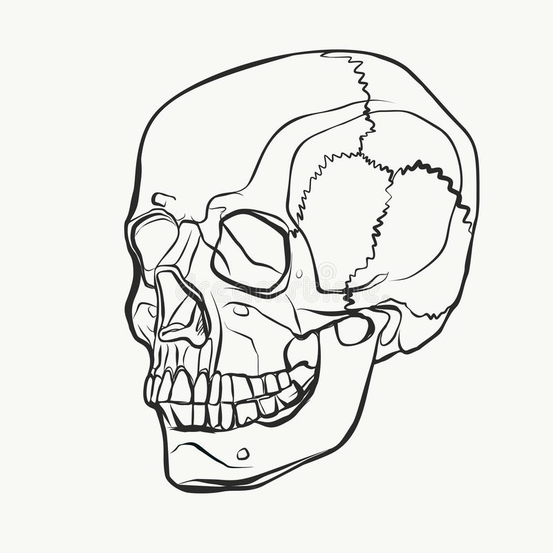 Skull pattern in hand drawn style. Vector black and white illustration vector illustration