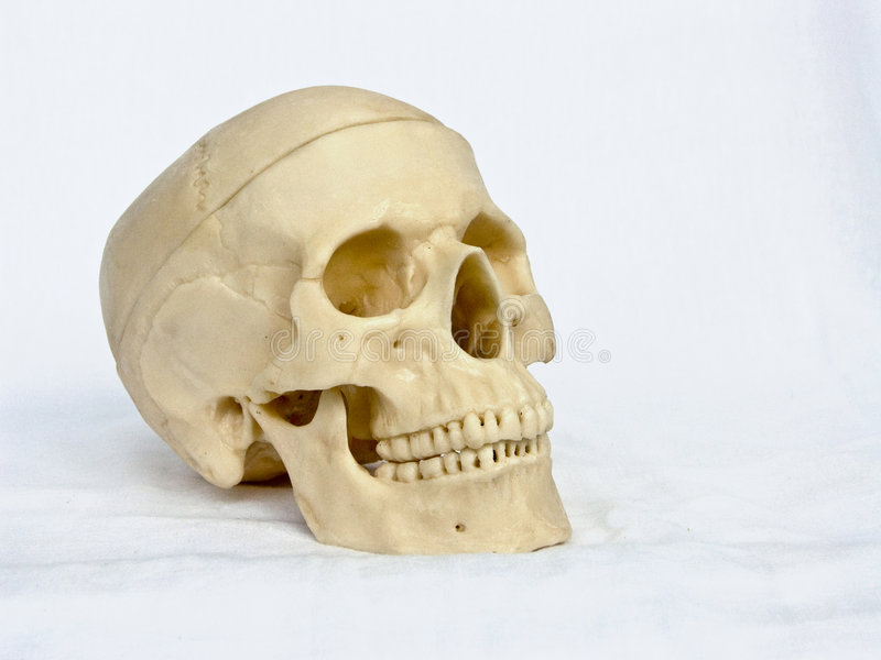 Skull Of The Person 4 Royalty Free Stock Photos