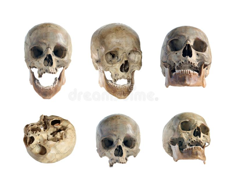Skull of the person. Skull of the person close-up on a white background stock image