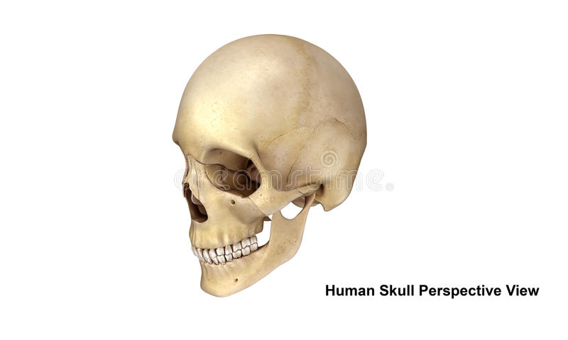 Skull Perspective view royalty free illustration