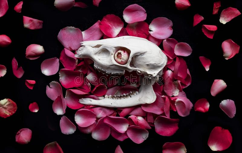 Skull on petals royalty free stock photography