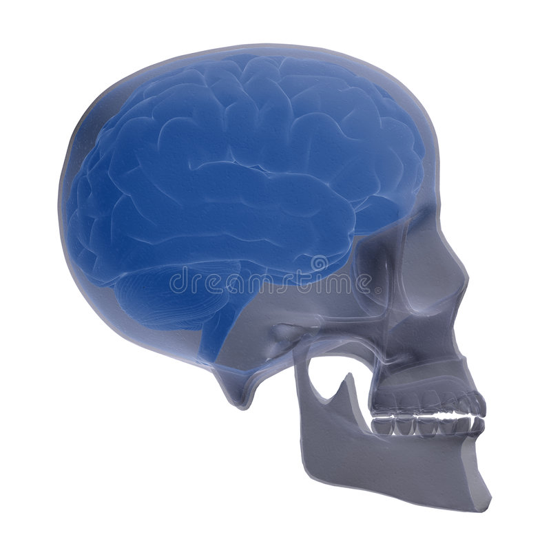Skull scan royalty free stock photos