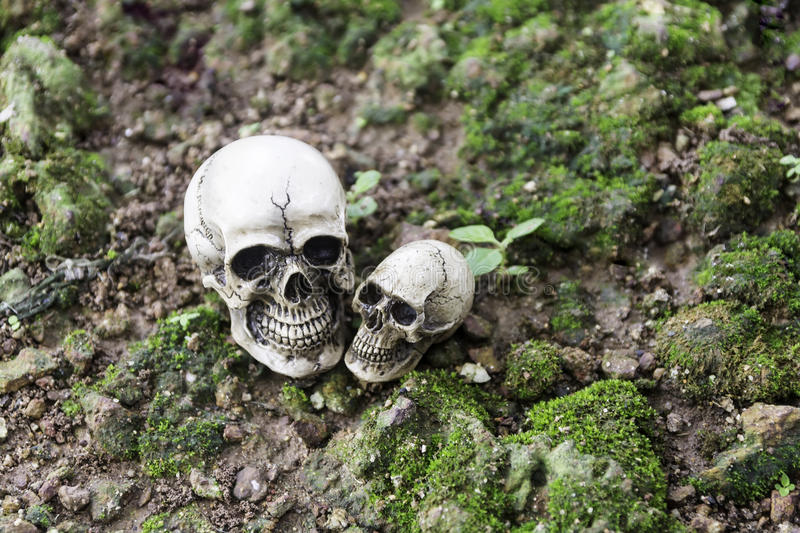 The skull or skeleton human photography. The skull or skeleton of human photography stock image