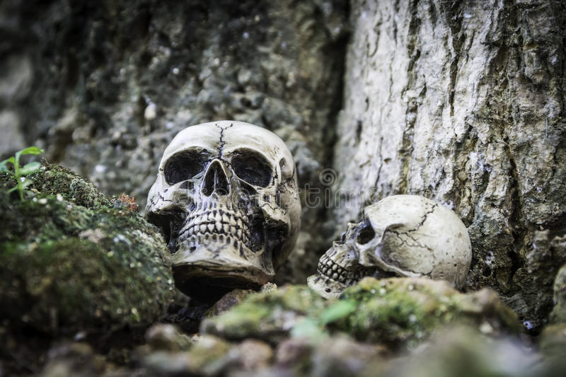 The skull or skeleton human photography. The skull or skeleton of human photography stock photos