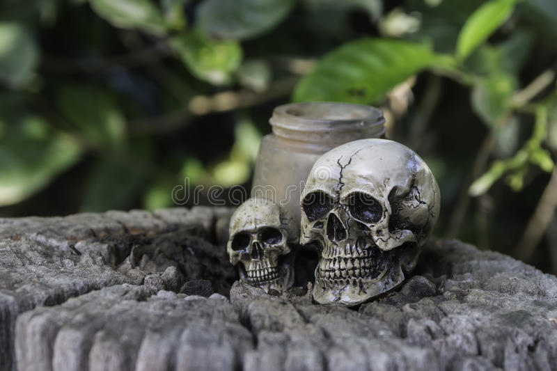 The skull or skeleton human photography. The skull or skeleton of human photography royalty free stock photography
