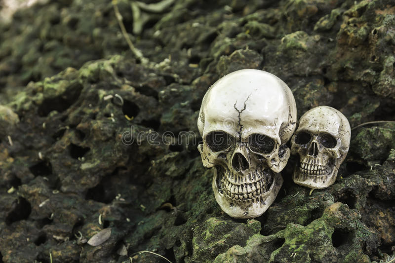 The skull or skeleton human photography. The skull or skeleton of human photography royalty free stock images