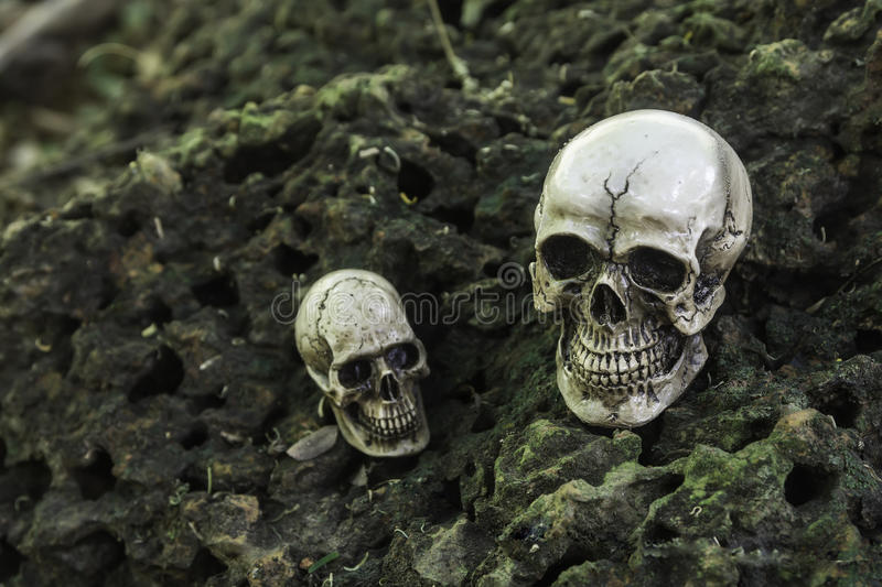 The skull or skeleton human photography. The skull or skeleton of human photography stock photography