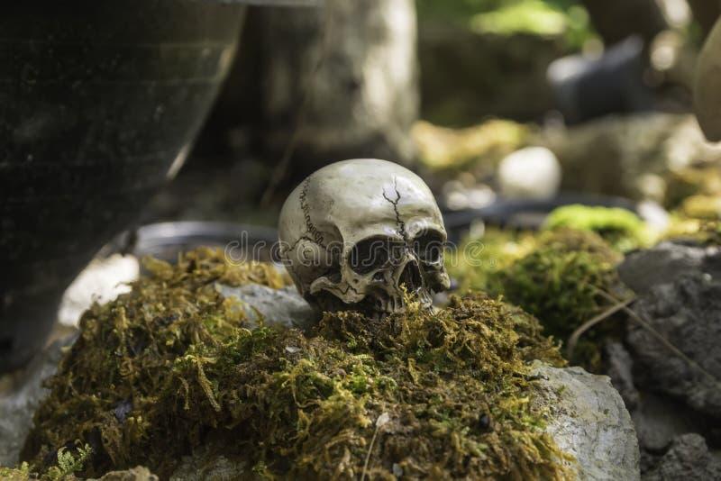 Skull or skeleton of human photography. Skull or skeleton human photography royalty free stock image