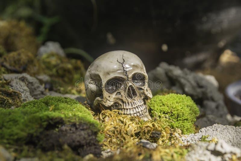 Skull or skeleton of human photography. Skull or skeleton human photography royalty free stock images