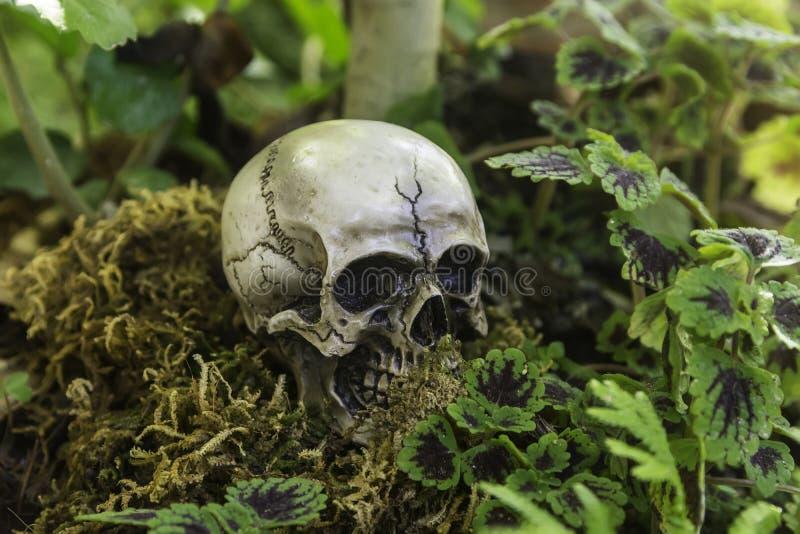 Skull or skeleton of human photography. Skull or skeleton human photography stock image