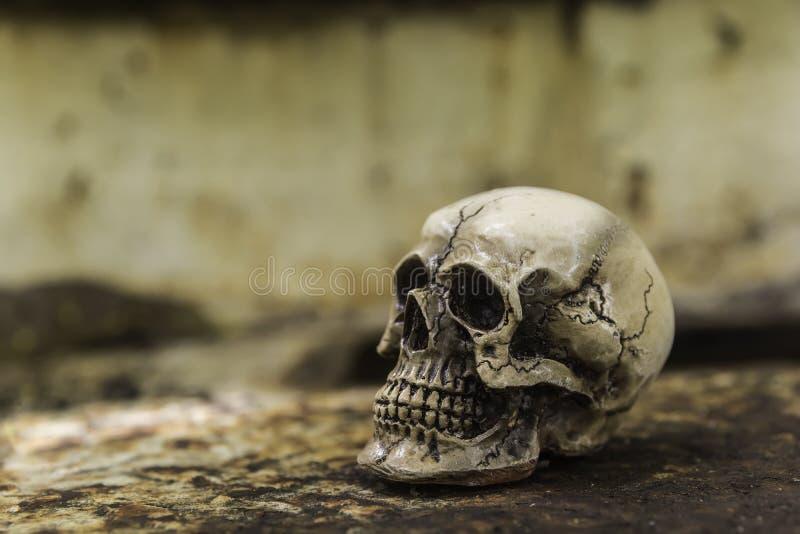 Skull or skeleton of human photography. Skull or skeleton human photography stock images
