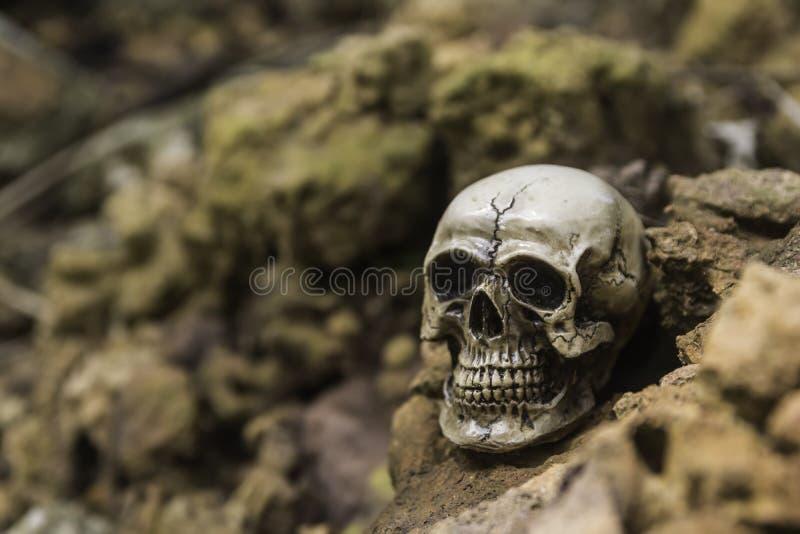 Skull or skeleton of human photography. Skull or skeleton human photography stock photo