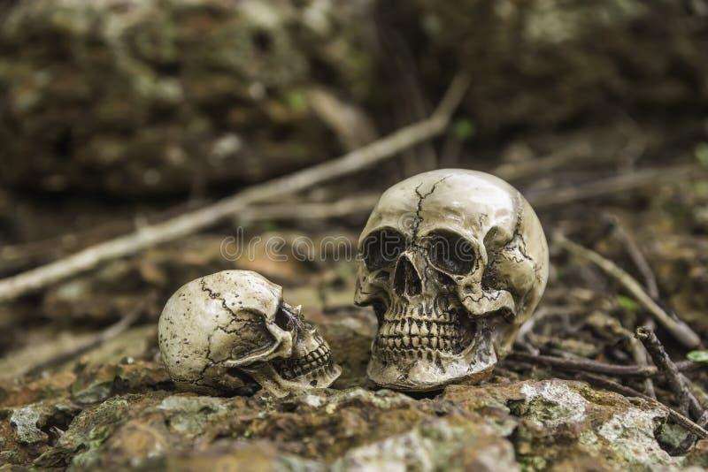 Skull or skeleton of human photography. Skull or skeleton human photography stock photography