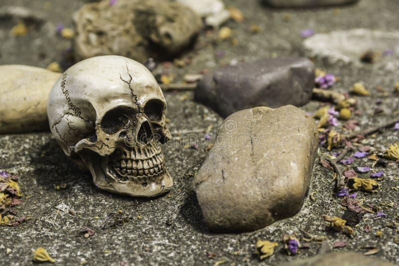 Skull or skeleton of human photography. Skull or skeleton human photography stock photos