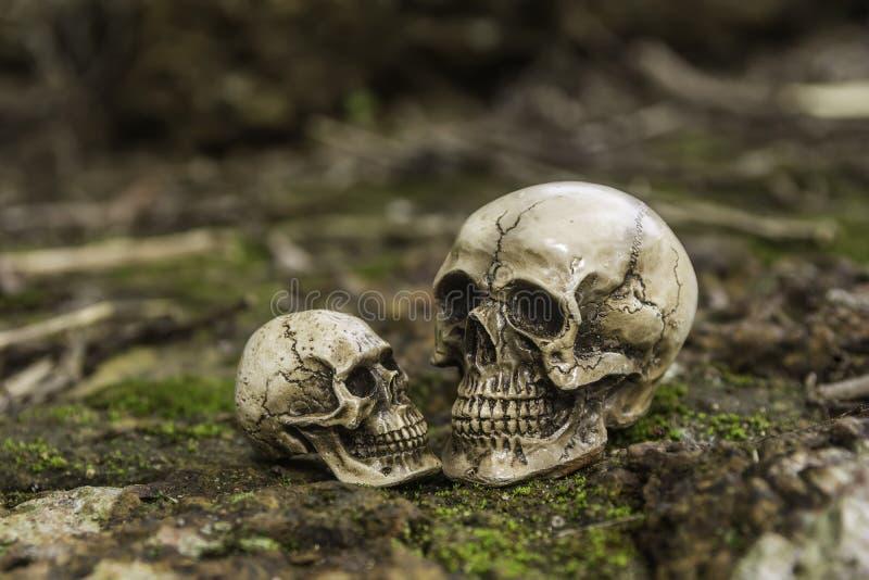 Skull or skeleton of human photography. Skull or skeleton human photography royalty free stock photo