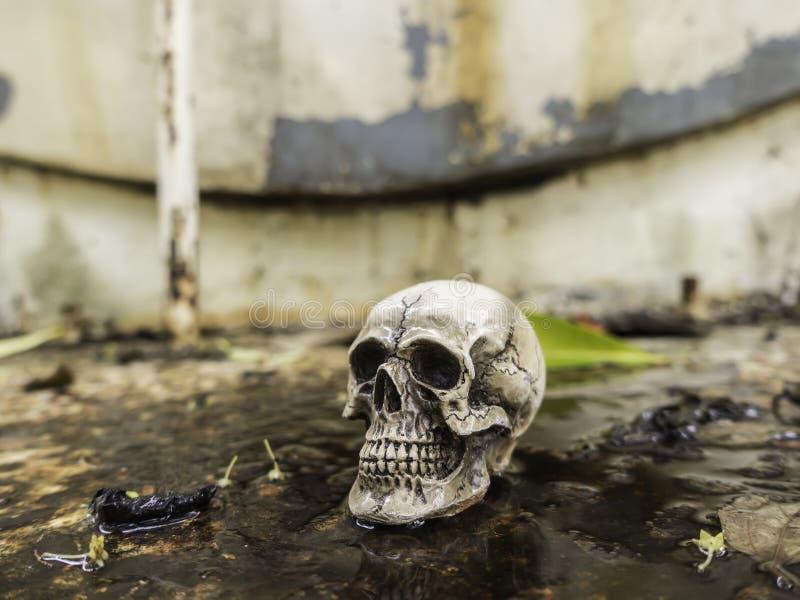 Skull or skeleton of human photography. Skull or skeleton human photography royalty free stock photography