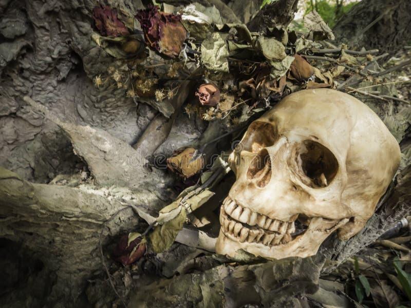 Skull or skeleton of human photography. Skull or skeleton human photography royalty free stock photos