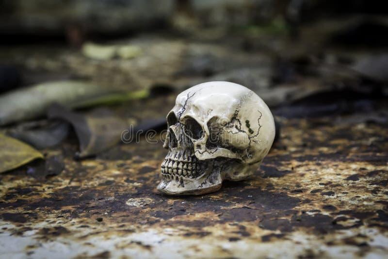 Skull or skeleton of human photography. Skull or skeleton human photographpy stock photography