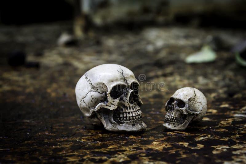 Skull or skeleton of human photography. Skull or skeleton human photographpy stock image